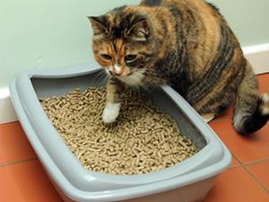 horse bedding pellets for cat litter